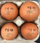 제주서 인체 유해 성분 검출 계란 유통…道, 긴급 회수 나서