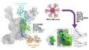 에이즈 치료 새 전략 짰다…HIV 단백질 설계해 항체 유도