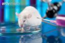수명연장 실현되나…미·일 연구진, 동물실험서 '회춘'효소 발견