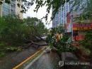 초강력 가을 태풍 타파…육해공 올스톱에 인명피해 속출