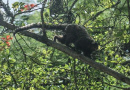브라질, 황열병 재확산 우려…6개월새 원숭이 38마리 죽어