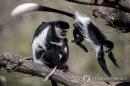 미국서 '치사율 10%' 원숭이두창 바이러스 감염자 발생